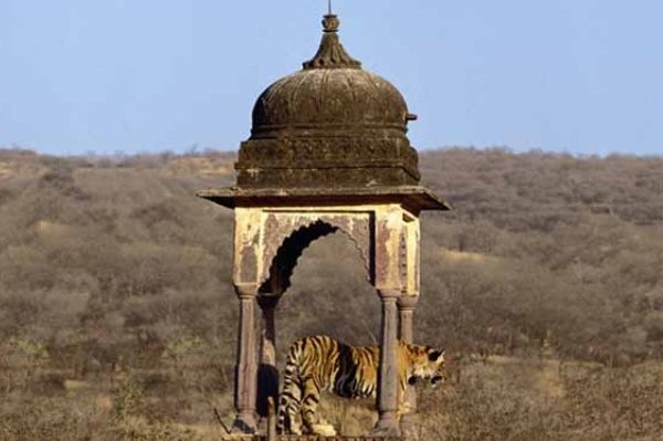 In search of tiger tour in India