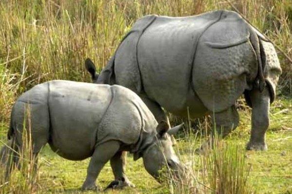 Wildlife tour of Eastern India